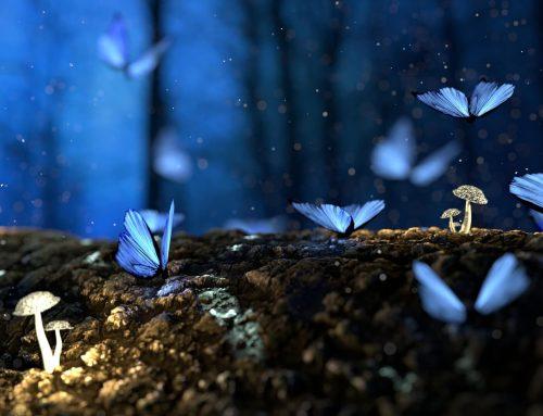 """Tratto da: """"Milioni di Farfalle"""" di Eben Alexander"""